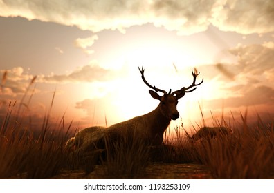 Deer in grass field at sunset or sunrise,3d illustration
