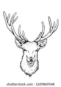 Deer head hand draw on white background