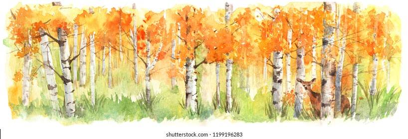 A deer hiding behind birch tree forest in autumn. Hand drawn watercolor painting with Panorama view.