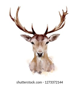 Deer isolated on white background.Christmas deer. Watercolor.