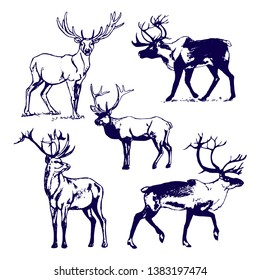 Deer on white background picture. Set of 