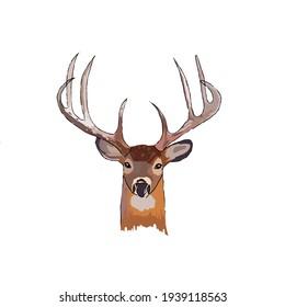 deer patterned and vector illustration