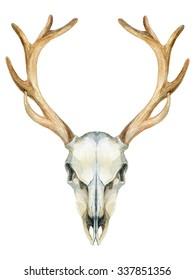 Deer skull. Animal skull isolated on white background. Watercolor hand painted illustration.