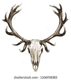 Deer Skull. Watercolor Illustration.