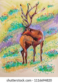 deer in spring, markers illustration