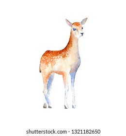 Deer.Wild animal fawn. Watercolor hand drawn illustration.