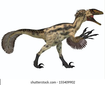 Deinonychus on White - Deinonychus is a carnivorous dinosaur from the early Cretaceous Period.