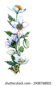 Delicate flowers of anemones with green leaves and buds in vertical composition. Hand drawn watercolor painting on white background for design of cards, wedding invitations, packaging, print, textiles