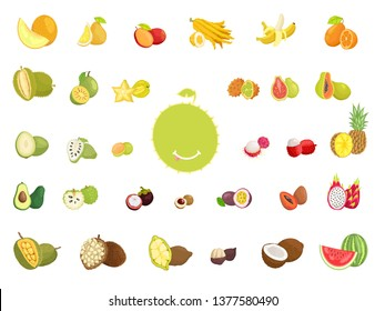 Delicious exotic fruits full of vitamins. natural products sweet and sour taste from hot countries all over world isolated raster illustrations.