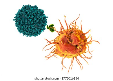 Dendritic cell presenting antigen to T-cell, 3D illustration