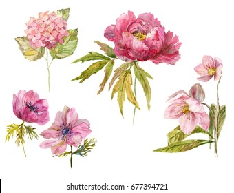 Dendritic peony, wind flower, hydrangea, hellebore rosy flowers, isolated objects. Hand drawn watercolor botanical illustration. Set of pink flowers