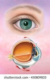and descriptive schematic illustration of the human eye.