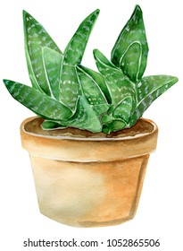 Desert watercolor painting of succulent, isolated on white background. Green homeplant. Brown pot, visible ground and strips