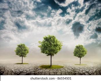 The desert where the trees grow