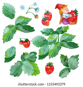 Design set with funny gnome eating strawberry, strawberry plant leaves, flowers and berries isolated on white. Watercolor cartoon doodle illustration, botanical and fantasy drawings