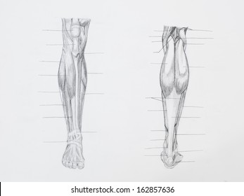 Detail of leg muscles pencil drawing on white paper