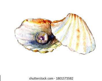 Detailed realstic sea pearl shell watercolor illustration
