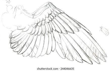 Wing Anatomy Images, Stock Photos & Vectors | Shutterstock