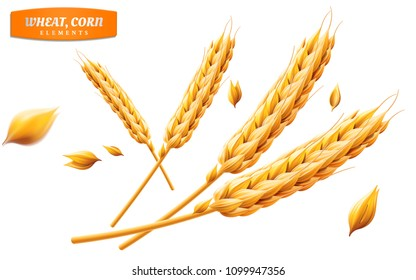Detailed wheat ears, oats or barley isolated on a yellow background. Natural ingredient element. Healthy food or agriculture, bread or crop theme. Realistic 3d illustration.