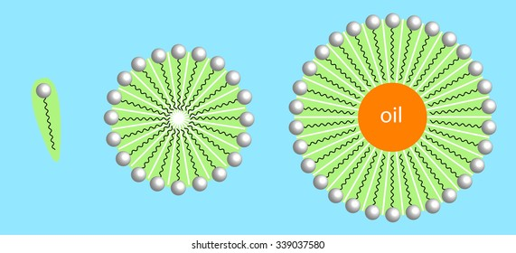 detergents forming micelles with oil droplet