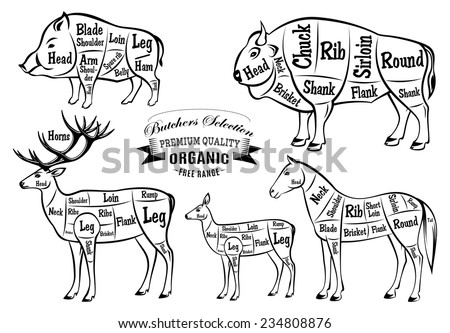 Royalty Free Stock Illustration Of Diagram Cut Carcasses Boar Bison
