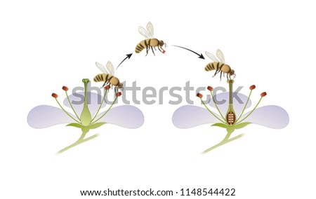 Diagram Flower Pollination By Insect Stock Illustration 1148544422