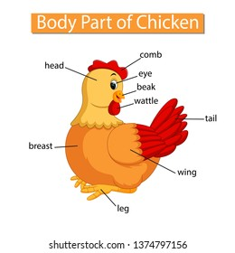 diagram showing body part of chicken