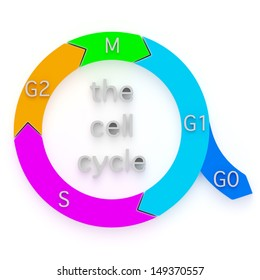 Cell cycle images stock photos vectors shutterstock diagram showing the sequential phases of the cell cycle or cell division cycle ccuart Images