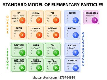 diagram standard model particle physics 12 stock vector royalty rh shutterstock com
