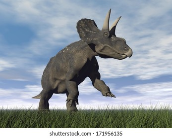 Diceratops dinosaur running on the green grass with mouth open by cloudy day