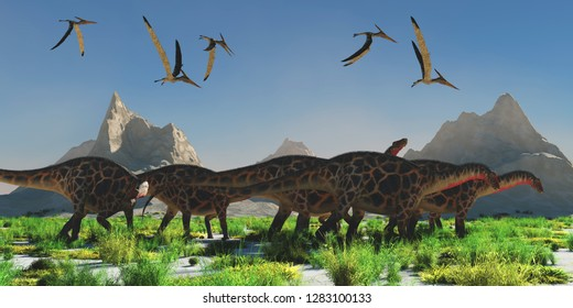 Dicraeosaurus Dinosaur Herd 3D illustration - A flock of Pteranodon reptiles fly over a herd of Dicraeosaurus dinosaurs during the Jurassic Period.