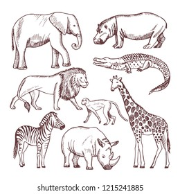 Different animals of savana and africa. Wild safari animals, african nature wildlife. illustration