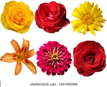 Different flowers on a transparent background. file png.