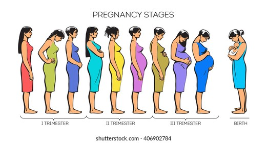 Different stage of pregnancy of a young girl. Stages trimesters many women, color sketch illustration