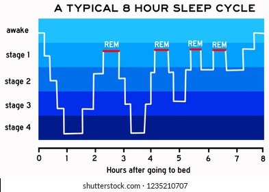 different steps of the night sleep cycle