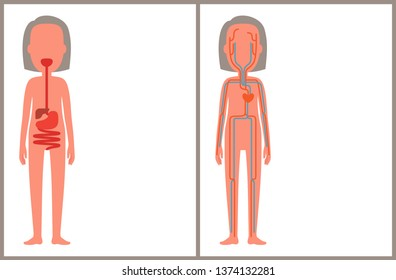 Digestive and blood systems color anatomical image of internal build female organism arteries set with floating plasma stomach structure scheme