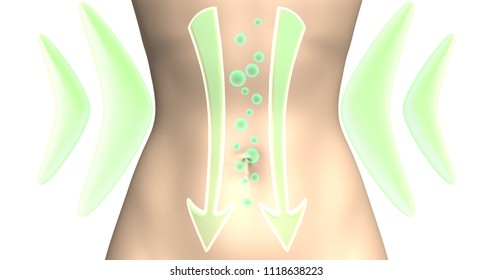 Digestive process. The action of probiotics, diet supplements for weight loss or the removal of gases from the intestine. 3d rendered illustration on white background.