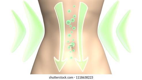 probióticos para perdida de peso
