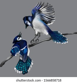 digital art: two blue jays sort things out
