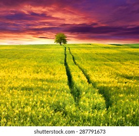 Digital artwork in watercolor painting style. Colorful summer sunrise with a field of yellow flowers.