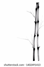 Digital drawing Chinese brush painting style illustration of bamboo shoots without leaves on right side of picture with space for text on left isolated on white background for  haiku poem or note