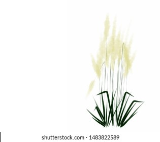 Digital drawing illustration of pampas grass isolated on white background with white copy space banner on left side  for text haiku poem or note