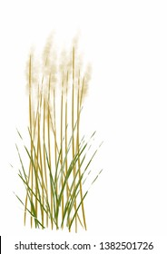 Digital drawing digital painting illustration of pampas grasses isolated on white background with copy space for text poem haiku or note
