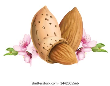 Digital Illustration of almond nuts and flowers.