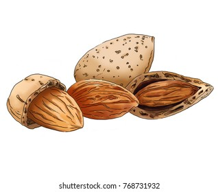Digital illustration of almonds in colour isolated on a white background