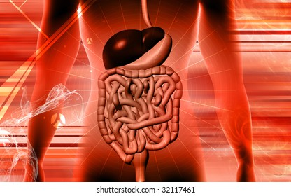 Digital illustration of digestive system