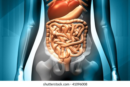 Digital illustration of human body with  digestive system in colour background