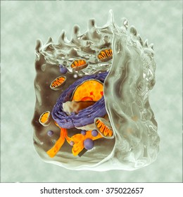 Digital Illustration Human Cell