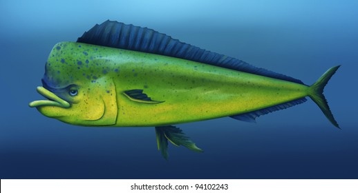 digital illustration of a mahi mahi fish swimming in the ocean