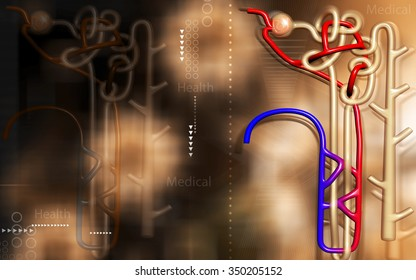 Digital illustration of  nephron   in  colour background